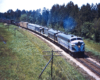A diesel locomotive passing by some pine trees