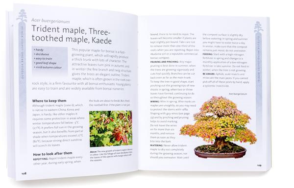 bonsai_book3