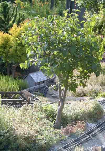 bonsai_pruning1