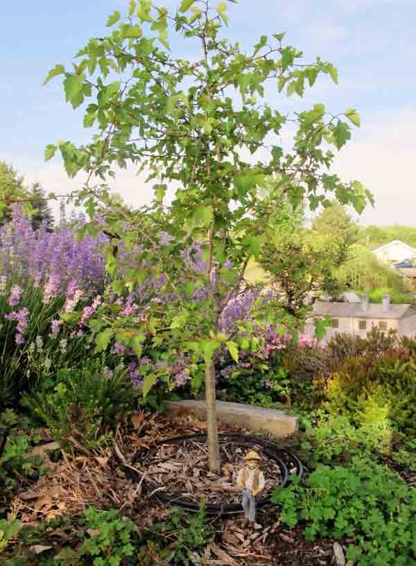 bonsai_pruning2