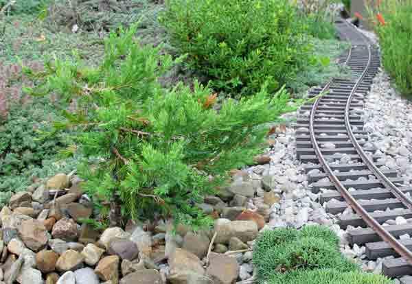 bonsai_pruning5
