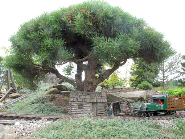 conifers2_1