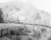 a steam passenger train rounding a corn field