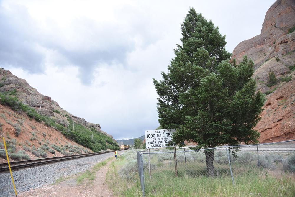 Transcontinental Railroad 1000 mile tree in Utah
