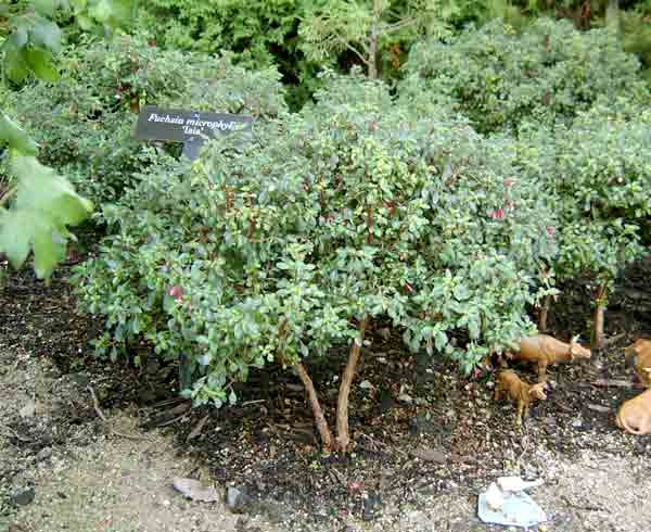 treelike1