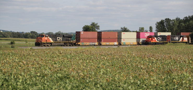 Red-and-black painted CN locomotive leads an intermodal train beside a soybean field.