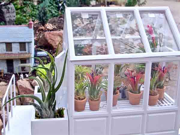 Air plants inside of a miniature greenhouse