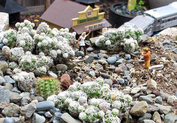 Thimble cactus in a garden railroad