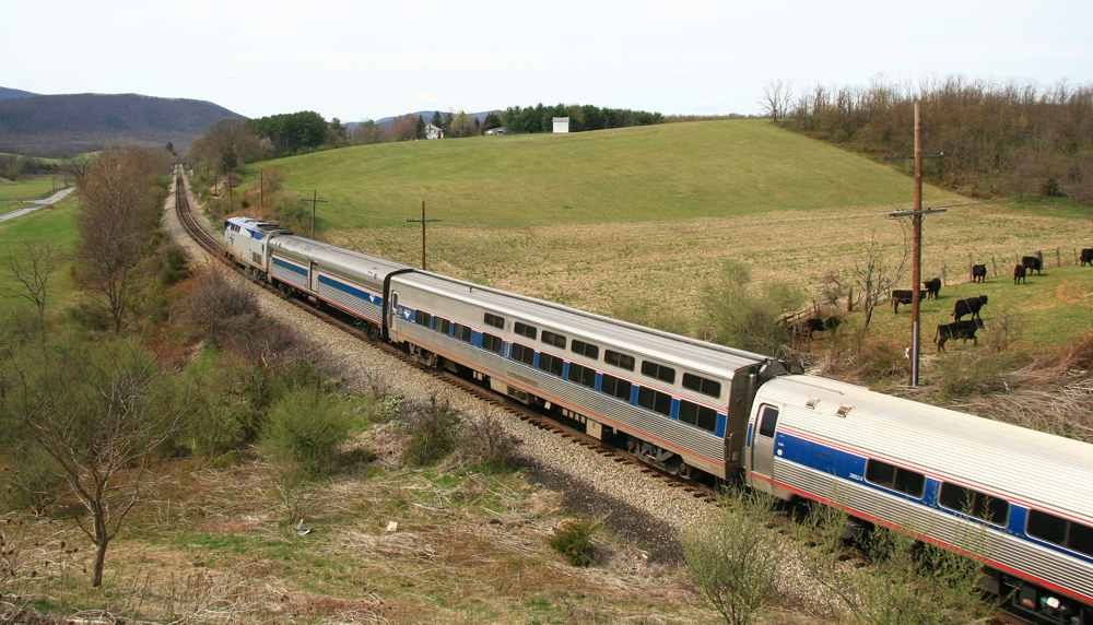 Locomotive and four cars of a passenger train move away from the photo location through rolling hills with cattle near tracks