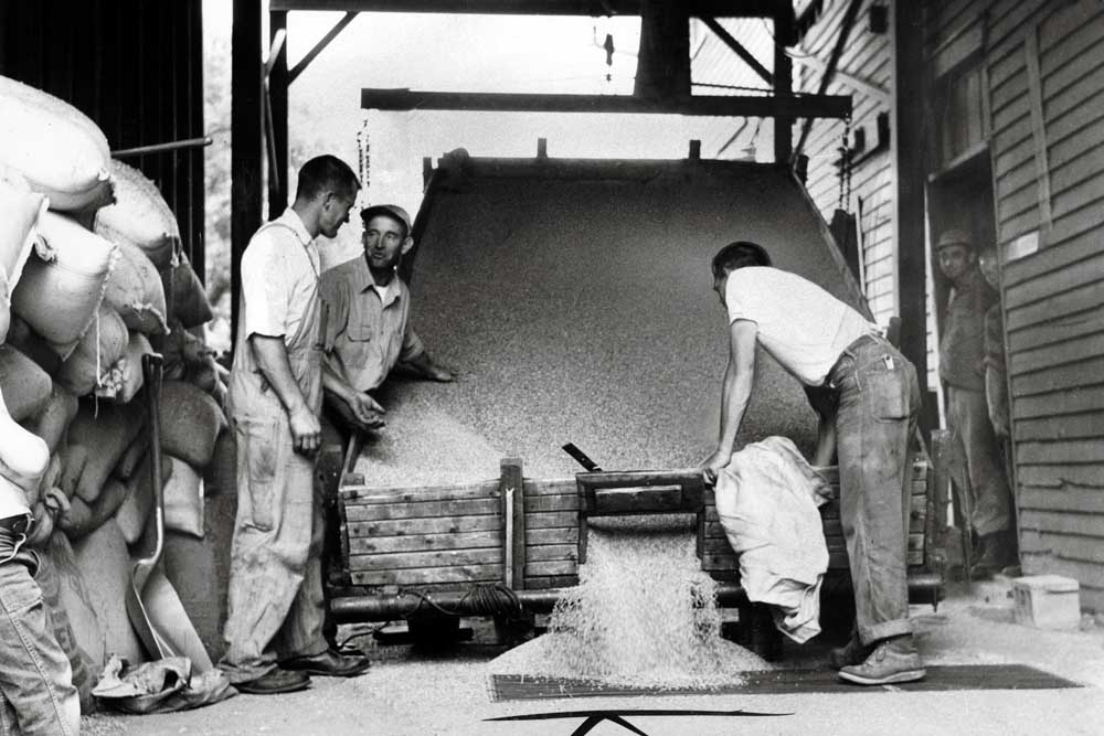 Men work to unload a truck of wheat for reloading into railcar
