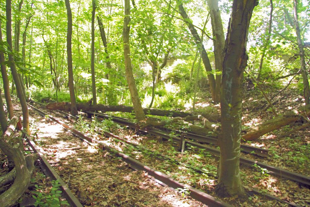 Tress growing through railroad tracks