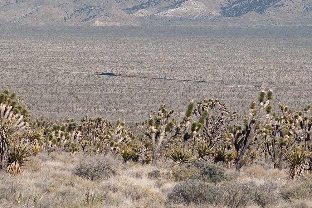 Joshua trees with train many miles distant