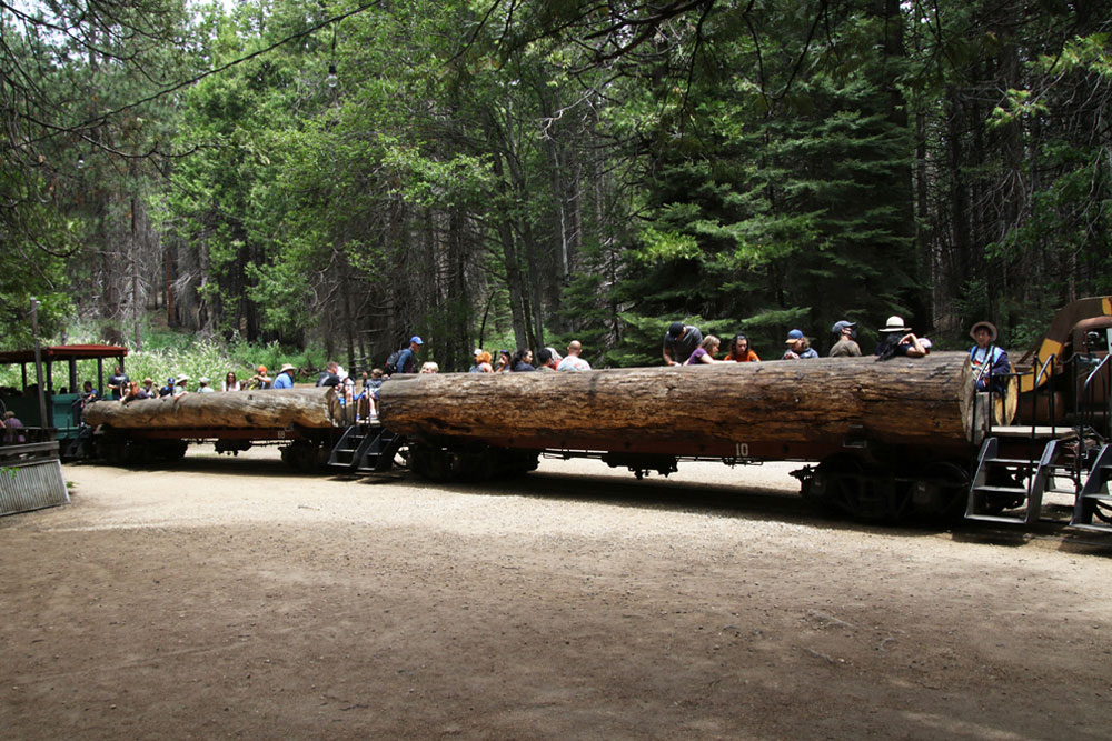 People in open-air railcar that looks like a log.